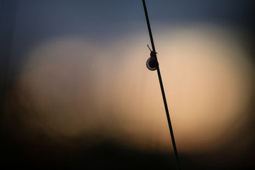 Small snail in twilight