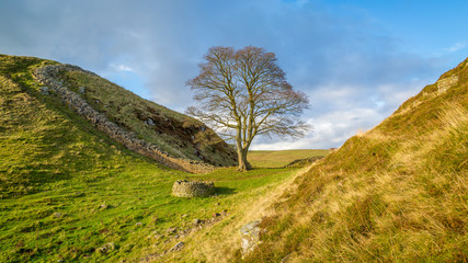 Sycamore Gap on Hadrian's wall in the Northumberland