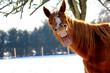Leinwandbild Motiv Funny horse