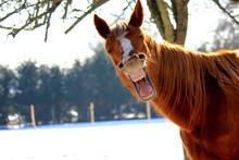 "Постер, картина, фотообои ""Funny horse"""