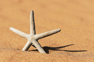 Starfish on sand with shadow