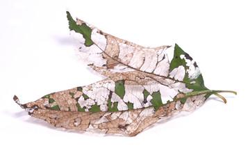nervures de feuilles mortes