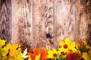 Autumn background, colorful tree leaves.