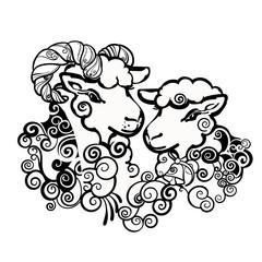 Ram and sheep. Sweet couple