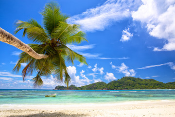 Beautiful palm beach in Mahe Island, Seychelles