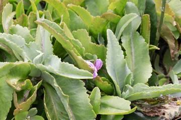 Aloe Plant - Fairchild gardens