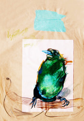 Drawing on paper of green paradise bird