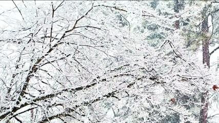 Snowy forest landscape panning shot