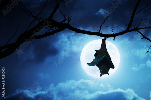 Leinwanddruck Bild Creepy Halloween Bat Hangs Upside Down With Full Moon