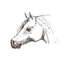 Horse - hand draw. Vector illustration.