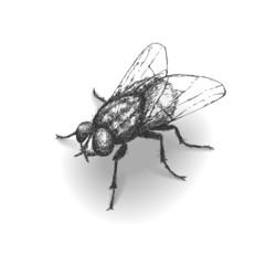 Sketch fly