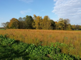 Herbstlandschaft mit verschiedenen Grüntönen und blauem Himmel