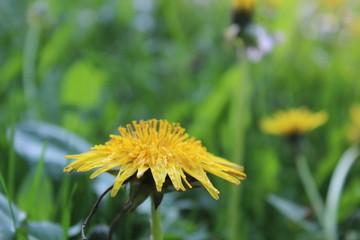 Natur im Frühling