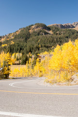 Aspen color at bend in the road