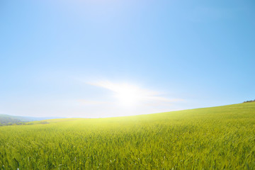 Prato con raggi di sole - globo - pianeta verde.