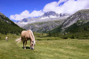 Horses Grazing Landscape mountains in Italy Trentino Dolomites