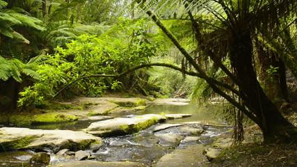 Erskine River running through the Otways National Park