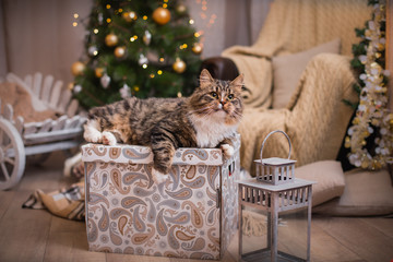 cat, new year holidays, christmas, christmas tree