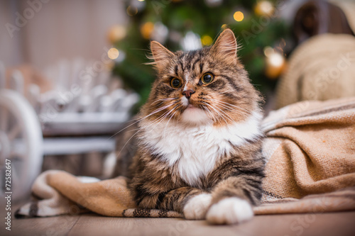 does getting your cat spayed change their personality