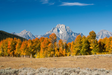 Grand tetons with Fall colors