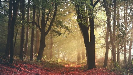 Morning light and fog in a forest during autumn