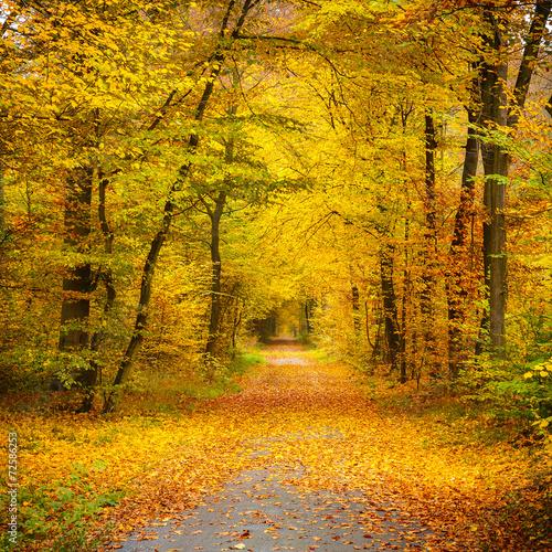 Panel Szklany Autumn forest