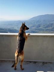 Cane affacciato al balcone ammira il panorama