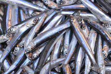 sardine