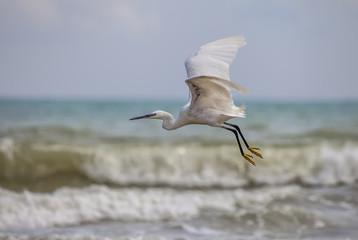 Egretta Garzetta (airone) in volo sopra il mare agitato