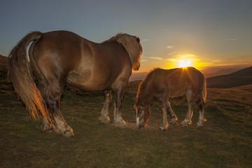Cavalla e il suo puledro alle luci del tramonto