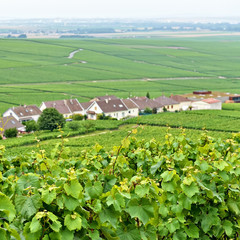 Typical landscape in Champagne-Ardenne