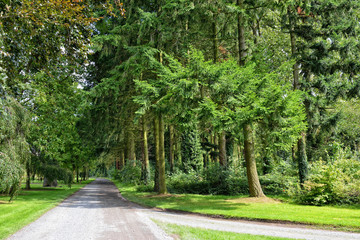 Forest parc roads and trees in summer day