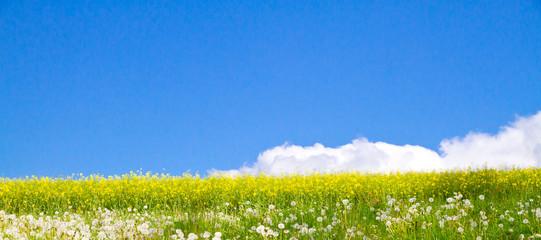 Rapsfeld und  Blumenwiese im Frühling - Panorama