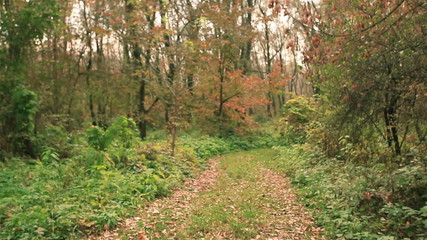 road in the autumn wood. Steadicam shot