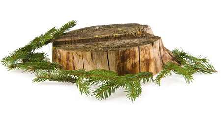 stump and branches of fir-tree