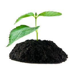 plant in earth