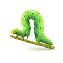 Caterpillar realistic isolated