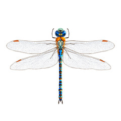 Dragonfly realistic isolated