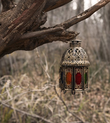 Vintage lantern on the tree in the gloomy forest