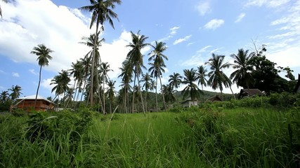 Coconut trees and houses in jungle forest. 1920x1080. HD