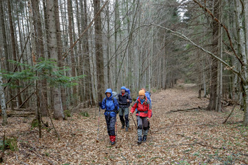 Group of hiker are walking in grey autumn forest