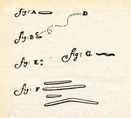 Leeuwenhoek's first drawing of microbes (1683)