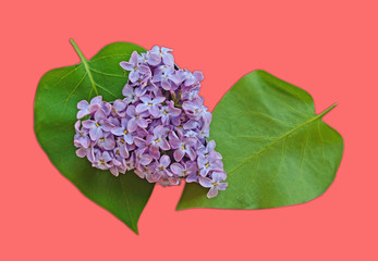 Leaves and petals lilac heart shaped (Valentine's Day, postcard,