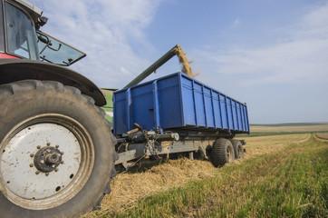 Harvester unloads wheat
