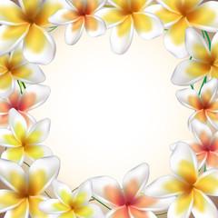 Frame from Frangipani flowers