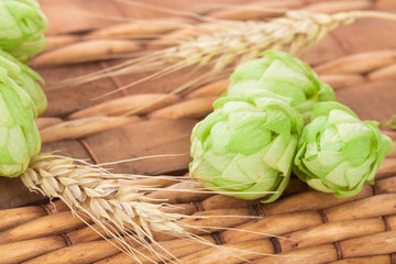 Close up of green hops
