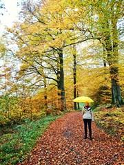 Spazieren gehen im herbstlichen Wald