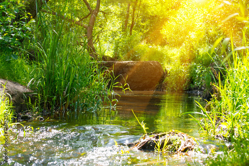 Stream in the tropical forest - 72615253