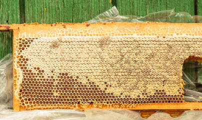 Fresh honey in honeycomb