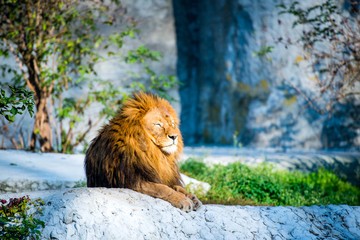 lion on a stone